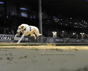 Ballymac Marine, wins Romford Puppy Cup on Sky TV